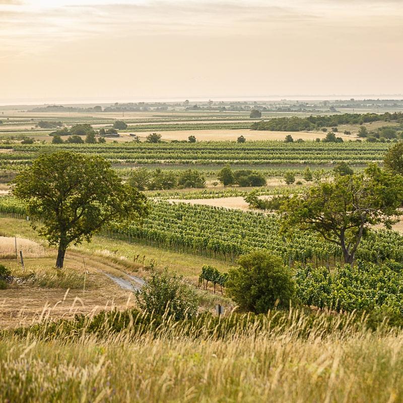 Region Oggau Weingärten