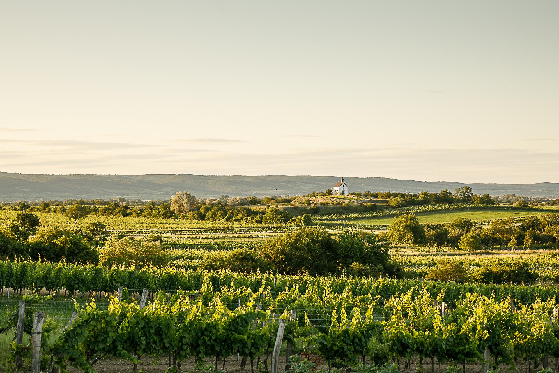 Altenberg Lage Ried Weingärten