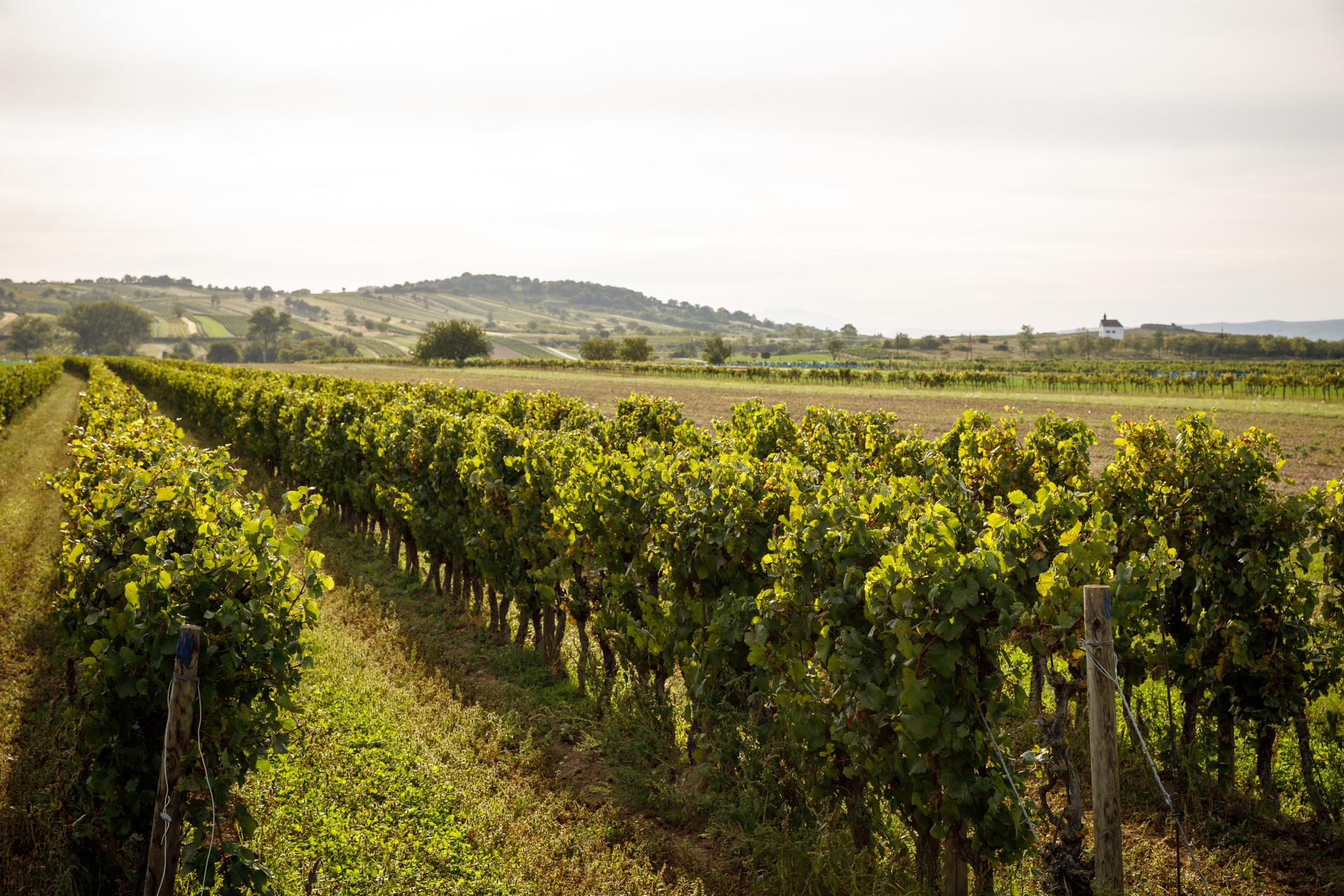 Isel Weingärten Lage Ried