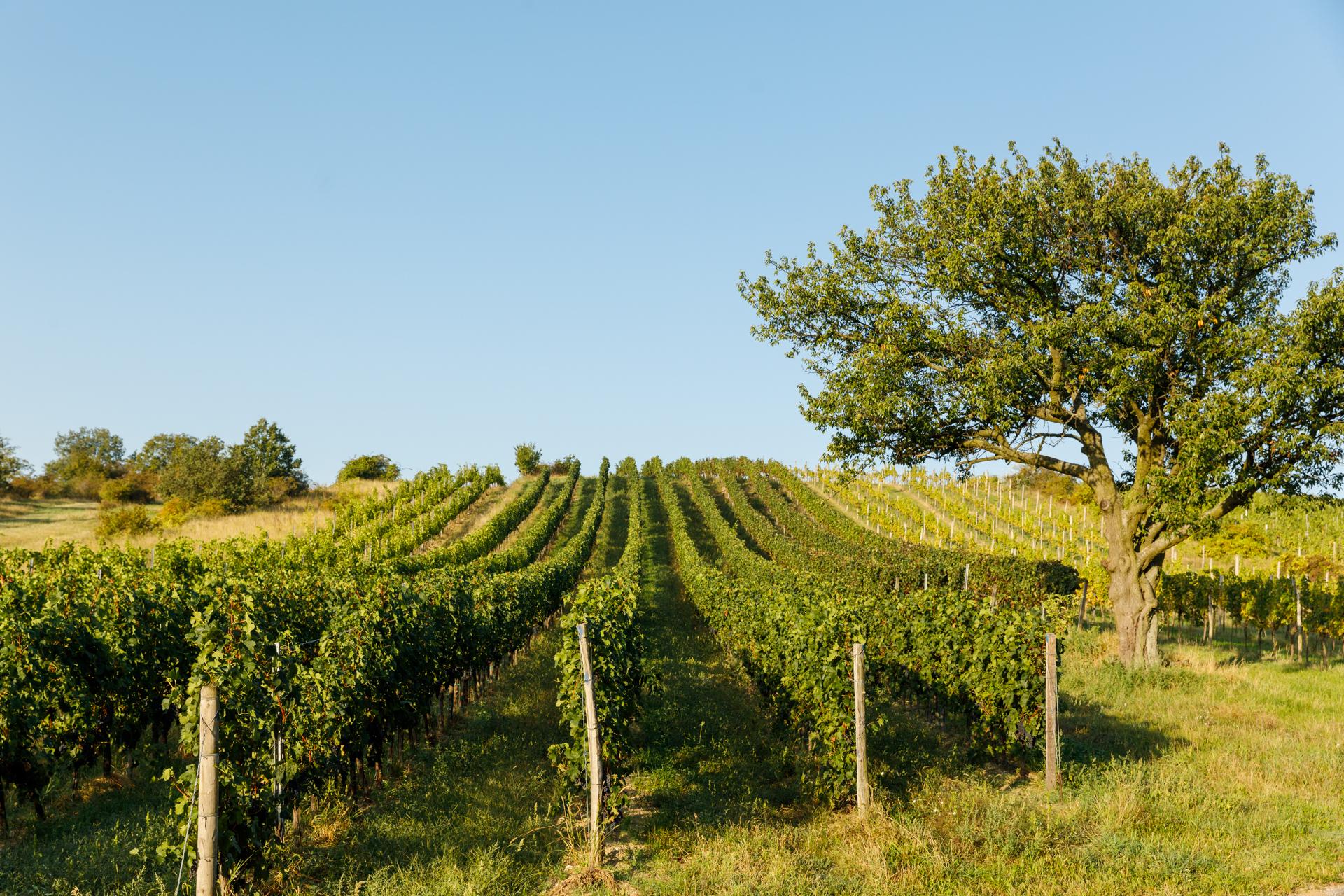 Loisland Weingärten Lage Ried