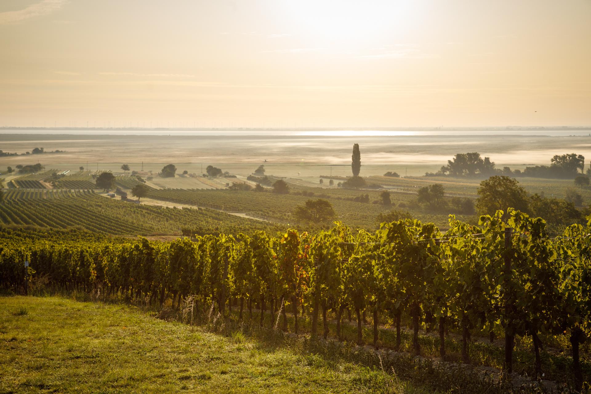 Marienthal Weingärten Weingut Mad