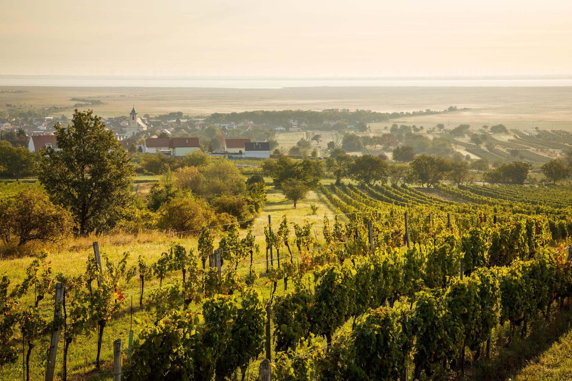 Steinhut Weingärten im Sonnenlicht
